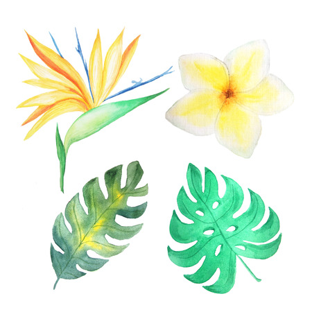 card making: Set of Watercolor hand painted tropical flowers, leaves and plants. Bright jungle exotic clip art perfect for summer wedding invitation and party card making