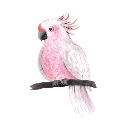 Watercolor tropical pink parrot isolated. Bright jungle exotic bird perfect for summer wedding invitation and party card making Banco de Imagens