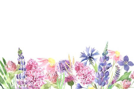 Watercolor hand painted wildflowers, field plants, garden herbs, delicate leaves and branches, wild meadow flowers and grass isolated on white. Modern watercolor style floral background template Stock Photo