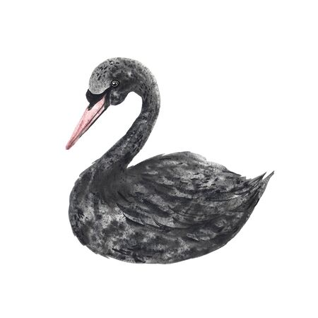 Watercolor hand painted black swan bird isolated on white. Monochrome cute magic character. Creative cartoon animal concept illustration perfect for baby print poster design and birthday card making