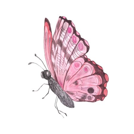 Pink bright watercolor butterfly isolated on white. Hand painted exotic detailed insect illustration perfect for wedding invitations and card making