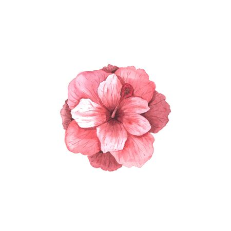 Watercolor hand painted tropical pink hibiscus flower. Bright jungle exotic illustration perfect for summer wedding invitation and party card making Banco de Imagens