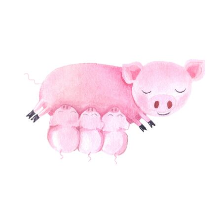 Watercolor cute pigs characters set isolated on white inspired by farm animals. Cartoon little piggy illustrations perfect for card making, birthday invitations and baby nursery design Banco de Imagens
