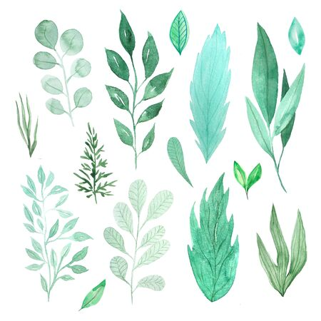 Watercolor green spring leaves set. Collection of hand painted green foliage inspired by garden greenery and plats. Isolated objects perfect for eco nature design