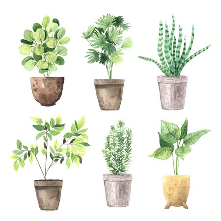 Watercolor hand painted house green plants in flower pots. Set of floral elemnts isolated on white. Decorative greenery collection perfect for print, poster, card making and scrapbooking design