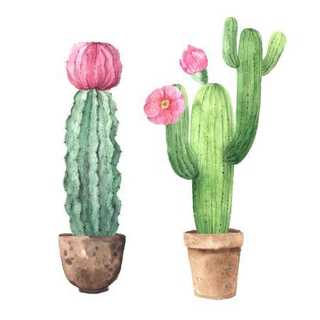 Aquarell handgemalte exotische Kaktussammlung mit rosa Blüten. Set tropischer Sukkulenten und blühender Pflanzen. Clipart im mexikanischen Stil, perfekt für Hochzeitseinladungen und botanischen Druck Standard-Bild