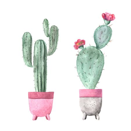 Watercolor hand painted exotic cactus collection with pink flowers. Set of tropic succulents and flowering plants. Mexican style clipart perfect for wedding invitatoin and botanical print Banco de Imagens