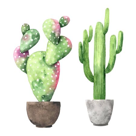 Watercolor hand painted exotic green cactus collection. Set of tropic succulents and flowering plants. Mexican style clipart perfect for wedding invitatoin and botanical print