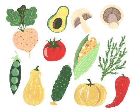 Gouache hand painted organic freshness vegetables elements set isolated. Radish, peas, pumpkin, cucumber, corn, pepper, avocado, mushrooms, tomato