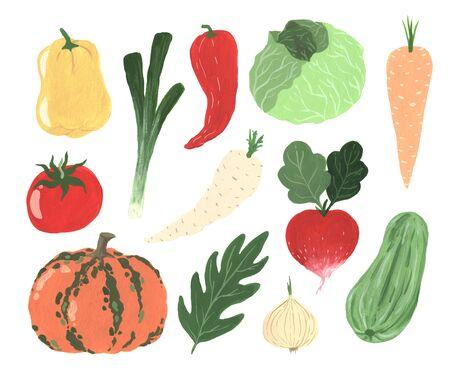 Gouache hand painted organic freshness vegetables elements set isolated. Cabbage, pumpkin, carrot, radish, zucchini, onion, pepper, tomato Stockfoto