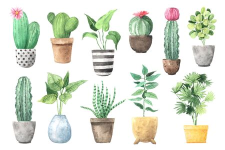 Watercolor hand painted house green plants and exotic catuses in flower pots. Set of floral elements. Decorative greenery collection perfect for print, poster, card making and scrapbooking design