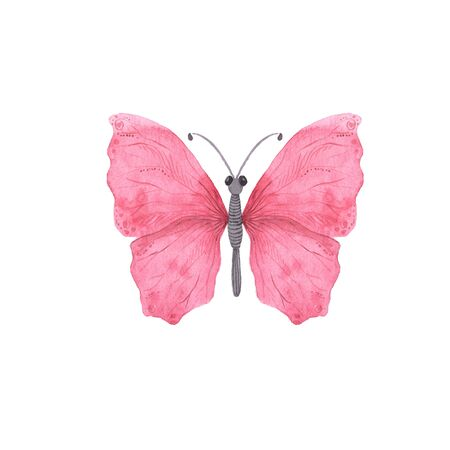 Pink bright watercolor butterfly isolated on white. Hand painted delicate exotic butterflies design perfect for wedding invitations and card making Stockfoto