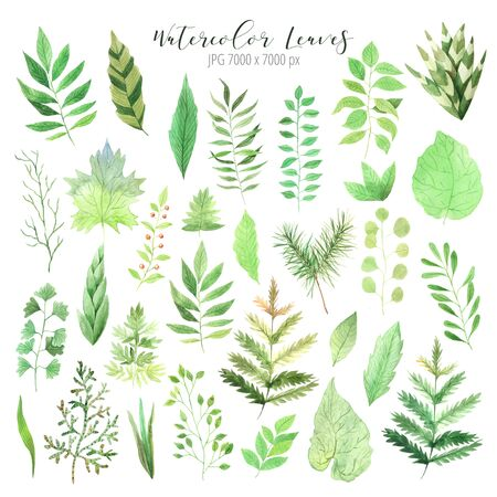 green spring leaves set. Collection of hand painted green foliage inspired by garden greenery and plats. Isolated objects perfect for eco nature design