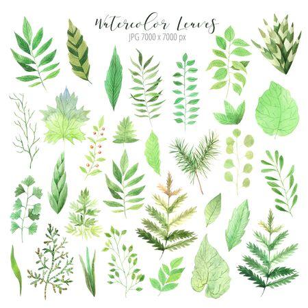 set di foglie verdi primaverili. Collezione di foglie verdi dipinte a mano ispirate al verde del giardino e alle piante. Oggetti isolati perfetti per il design eco-naturale