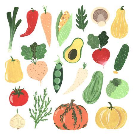 Gouache handgemalte organische Frischegemüseelemente stellten lokalisiert ein. Rettich, Kohl, Kürbis, Karotte, Zucchini, Zwiebel, Paprika, Tomate, Erbsen, Gurke, Mais, Avocado, Pilze. Standard-Bild