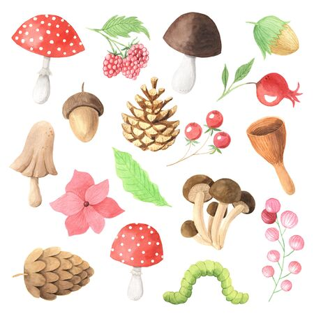 autumn mushrooms, berry, leaves, branches and plants set. Collection of hand drawn forest nature elemnts isolated on white iperfect for  design project