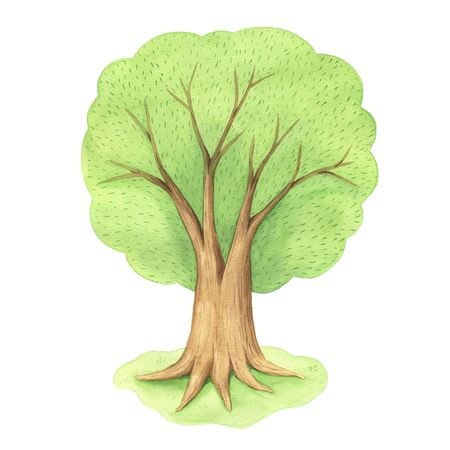 hand painted green tree isolated on white. Cute cartoon forest oak illustration perfect for print poster and kid design Reklamní fotografie