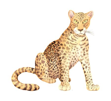 wild leopard animal isolated on white. Hand painted exotic tropical realistic  perfect for print poster design and card making