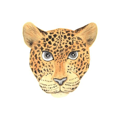 wild leopard head isolated on white. Hand painted exotic tropical realistic  portrait perfect for print poster design and card making