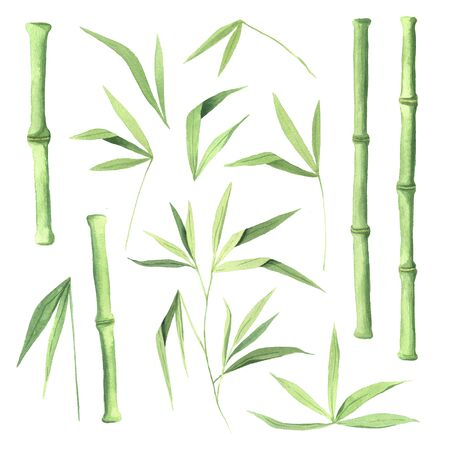 green bamboo plant set inspired by japanese jungle tree and nature. Hand painted eco greenery clipart isolated on white background Reklamní fotografie