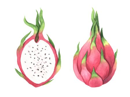 Watercolor summer pink dragon fruits set. Hand painted realistic exotic fresh clipart collection isolated on white background perfect for print, card making, menu design