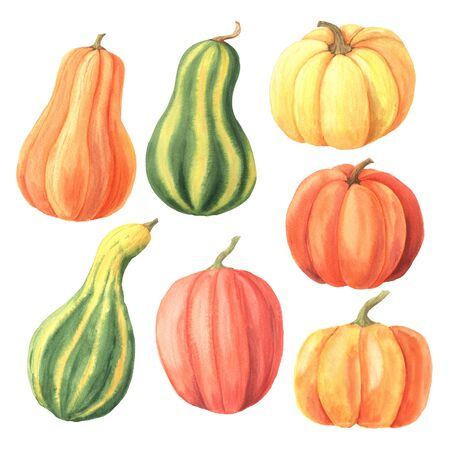 Watercolor hand drawn green, orange, yellow pumpkin set inspired by autumn harvest season. Happy Thanksgiving Pumpkin clipart. Colorful bright vegetables isolated on white background