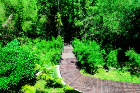 Wooden Walk Curve Way in The Garden photo