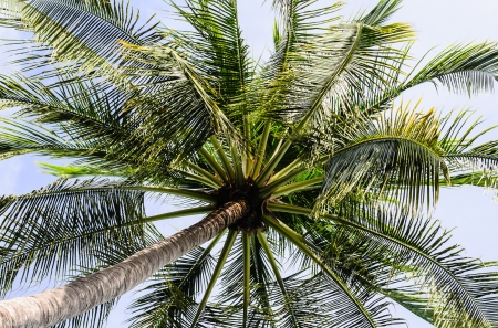 sun drenched: View Under Coconut Tree with White Background, Photo taken on  July 5th, 2013