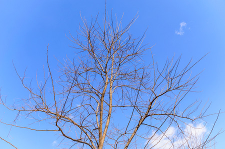 Blue Sky and Snowy Branches, Photo on March 09, 2014 photo