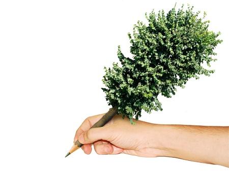 pencil tree photo