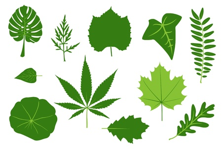 marijuana leaf: green leaves illustration  Illustration