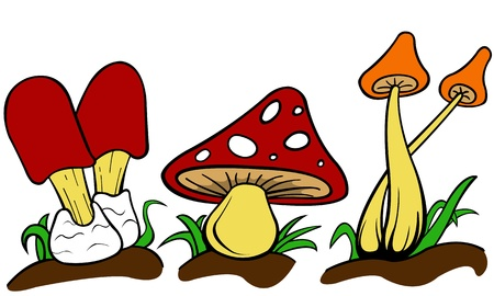 color illustration of mushrooms isolated on white Vector