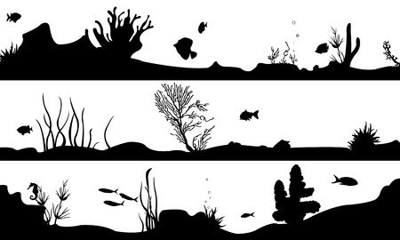 algas marinas: paisaje marino aislado en blanco