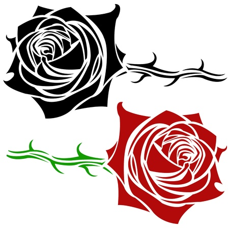 rose illustration Vector