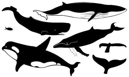 fish silhouette: set of different whales isolated on white