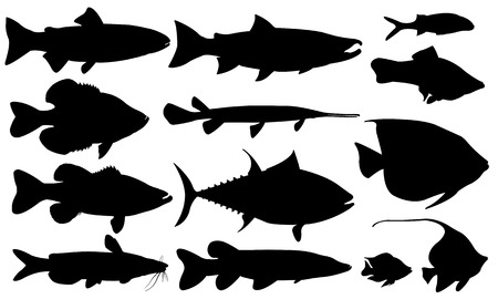 fish set isolated on white Vector