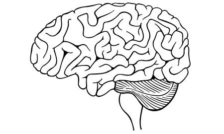 cerebra: human brain isolated Illustration