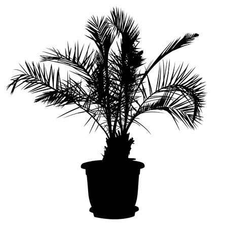 potted palm tree illustration Vector
