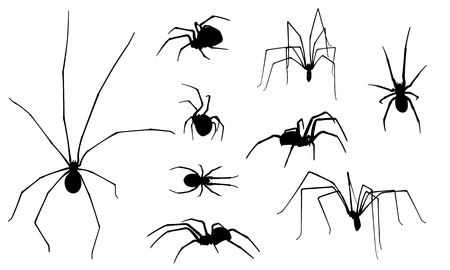 arachnophobia: set of different spiders Illustration