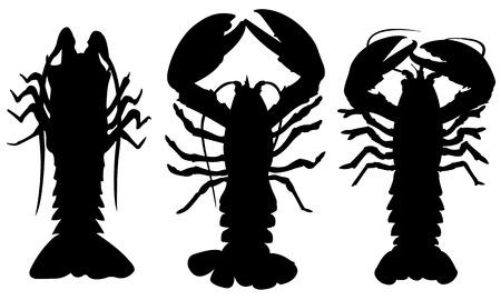 langouste: set of different lobsters Illustration