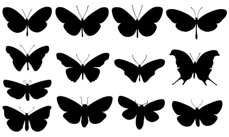 black butterfly: set of different butterflies isolated on white