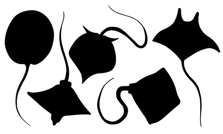 Set of different stingray silhouettes isolated on white