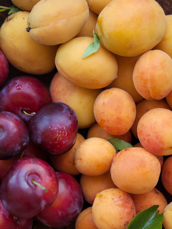 apricot kernels: Apricot and plum on wooden background