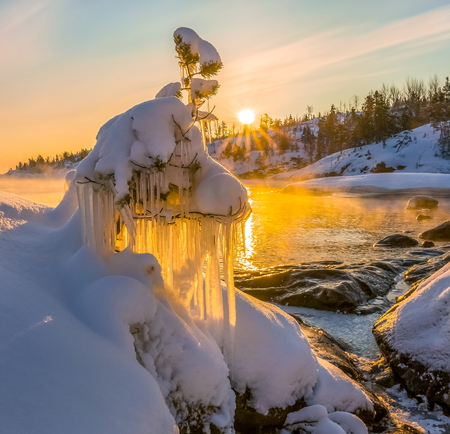Creativity of Ladoga. Ice sculptures on the branches. Small pines on the background of dawn gold. Karelia. Ladoga lake.