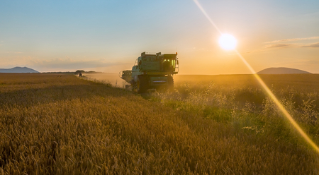 Technics goes on the road. Harvest. The combine harvester removes the wheat. The wheat ripened. Wheat field, grain.