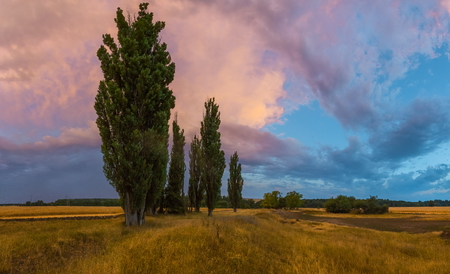 The field of barley after a summer thunderstorm. Colorful sky during sunset. South of Russia. Stockfoto
