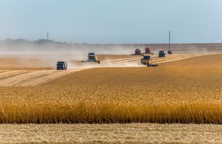 Der Mähdrescher entfernt Weizenfelder. Ernte. Der Weizen reifte. Landwirtschaftliche Aktivitäten im Süden Russlands.
