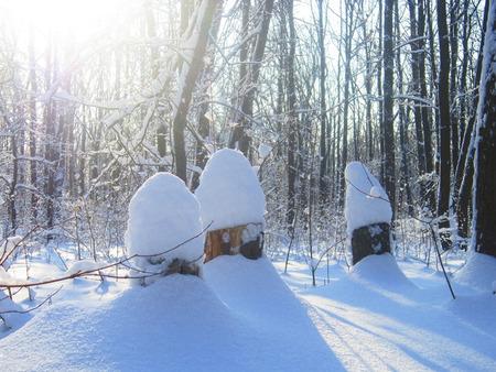 frost bound: three stump