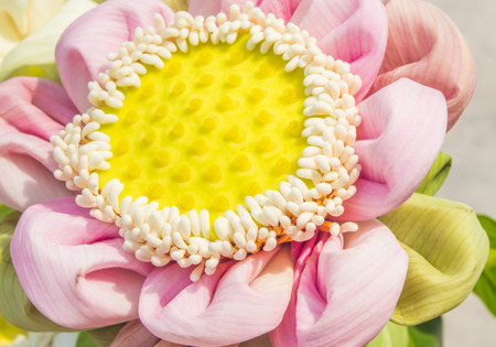 thai people: This lotus is an antique traditional making by Thai people. They make it every buddha