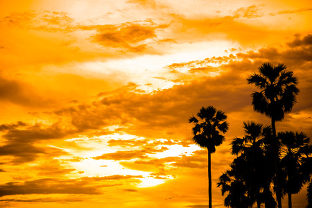 sugar palm: sugar palm with sunrise and cloud Silhouette and effect tone